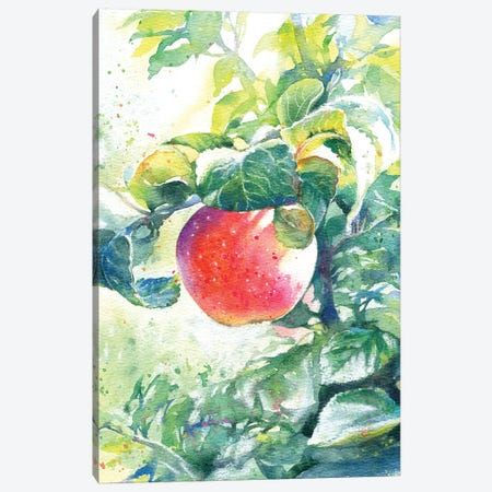 The Apple Canvas Print #IGN56} by Marina Ignatova Canvas Print