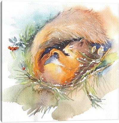 Sleeping Squirrel Canvas Art Print
