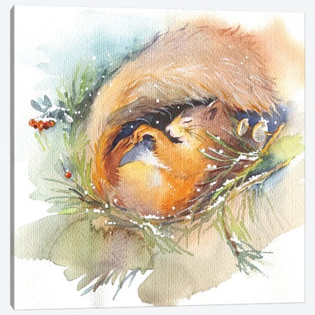 Sleeping Squirrel Canvas Print #IGN70} by Marina Ignatova Canvas Wall Art