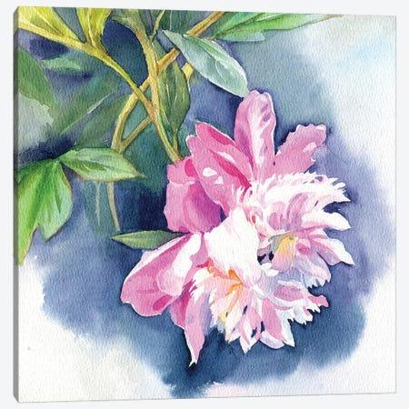 Peony I Canvas Print #IGN85} by Marina Ignatova Canvas Art