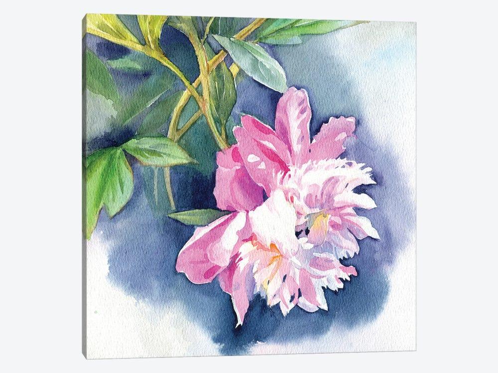 Peony I by Marina Ignatova 1-piece Canvas Art Print
