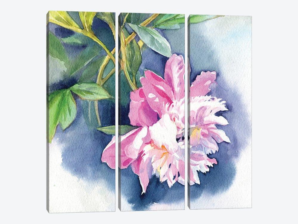 Peony I by Marina Ignatova 3-piece Canvas Print