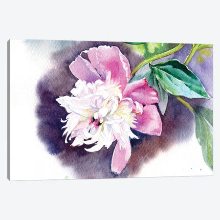 Peony II Canvas Print #IGN86} by Marina Ignatova Canvas Wall Art