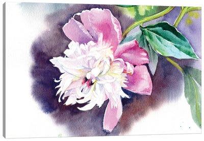 Peony II Canvas Art Print