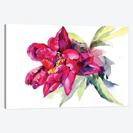 Red Peony Canvas Print #IGN99} by Marina Ignatova Canvas Artwork