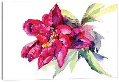 Red Peony Canvas Art Print