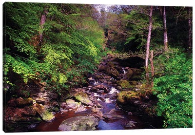 Co Derry, Burntollet River, Ness Woods, Canvas Art Print