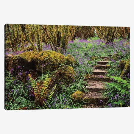 Ardcarrig Gardens, Co Galway, Ireland, Hazel Coppice And Bluebells Canvas Print #IIM4} by Irish Image Collection Canvas Artwork