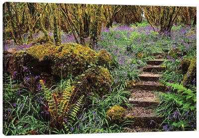 Ardcarrig Gardens, Co Galway, Ireland, Hazel Coppice And Bluebells Canvas Art Print
