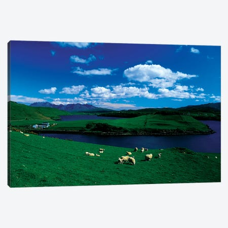Sheep, Farm On The Isle Of Skye, Scotland Canvas Print #IIM71} by Irish Image Collection Canvas Art