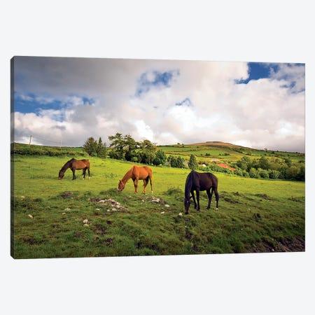 Three Horses Grazing In Field Canvas Print #IIM77} by Irish Image Collection Art Print
