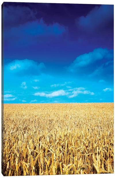 Wheat Field, Near Collon, Co Louth, Ireland Canvas Art Print