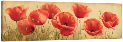 Poppies Grace I Canvas Art Print
