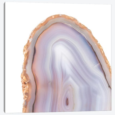 Rose Quartz Canvas Print #ILL7} by 5by5collective Canvas Art