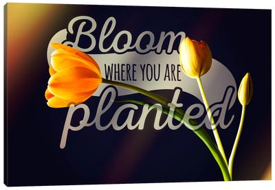 Bloom Where you're Planted Canvas Print #ILS28