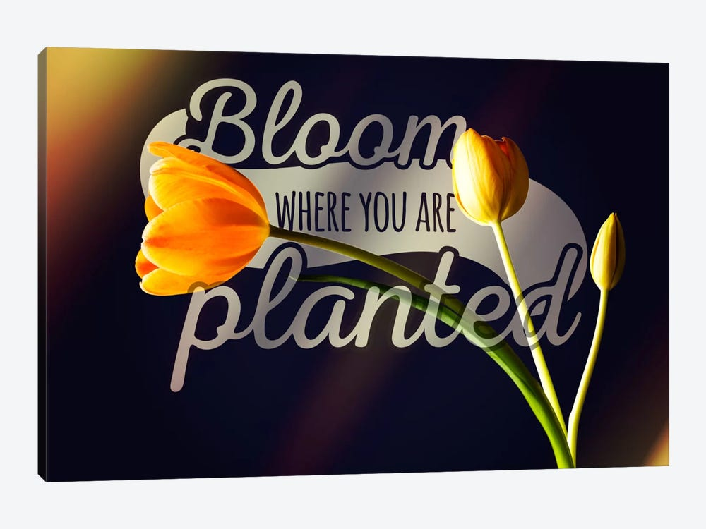 Bloom Where you're Planted by 5by5collective 1-piece Canvas Print