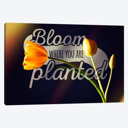 Bloom Where you're Planted Canvas Print #ILS28} by 5by5collective Canvas Print