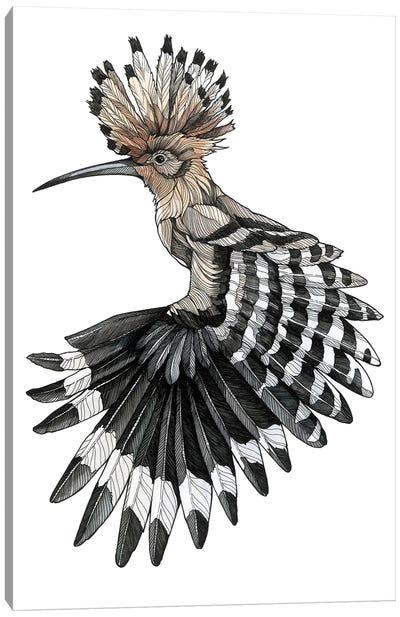 Hoopoe Canvas Art Print