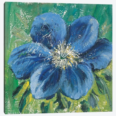 Meconopsis Canvas Print #INA30} by Katharina Schöttler Canvas Art Print