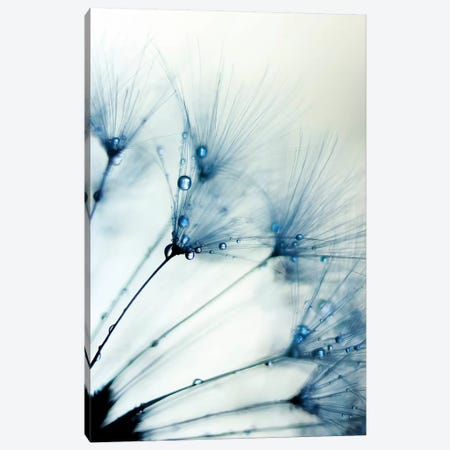Misty Blue II Canvas Print #INB104} by Ingrid Beddoes Canvas Print
