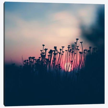 Summer Beach Sunset I Canvas Print #INB107} by Ingrid Beddoes Art Print