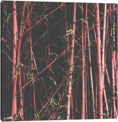 Bamboo Pink Canvas Art Print