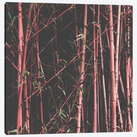 Bamboo Pink Canvas Print #INB114} by Ingrid Beddoes Canvas Art