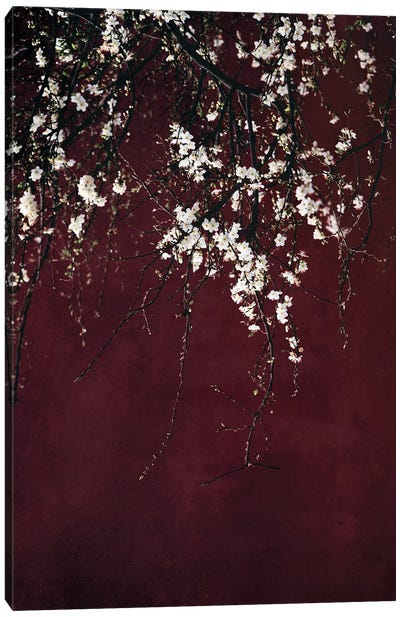 Blossoms On Ruby Red Canvas Art Print