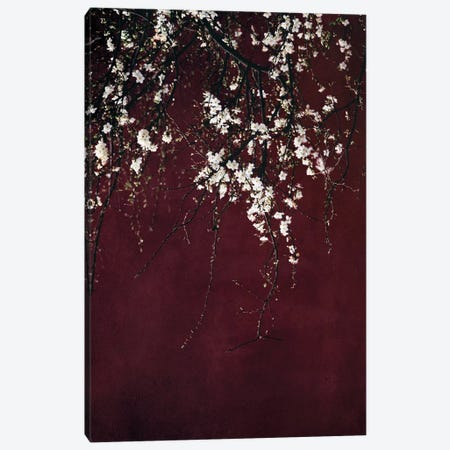 Blossoms On Ruby Red Canvas Print #INB20} by Ingrid Beddoes Art Print
