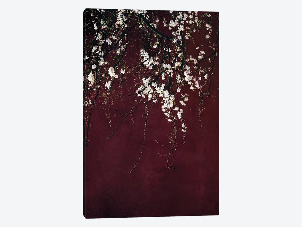 Blossoms On Ruby Red by Ingrid Beddoes 1-piece Canvas Print