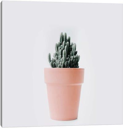 Cactus Love III Canvas Art Print
