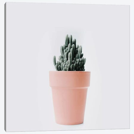 Cactus Love III Canvas Print #INB25} by Ingrid Beddoes Canvas Artwork