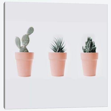 Cactus Love IV Canvas Print #INB26} by Ingrid Beddoes Canvas Art