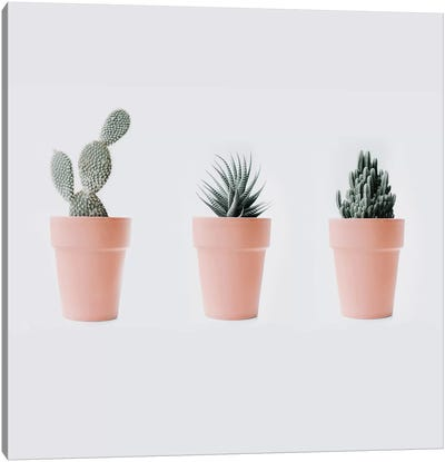 Cactus Love IV Canvas Art Print