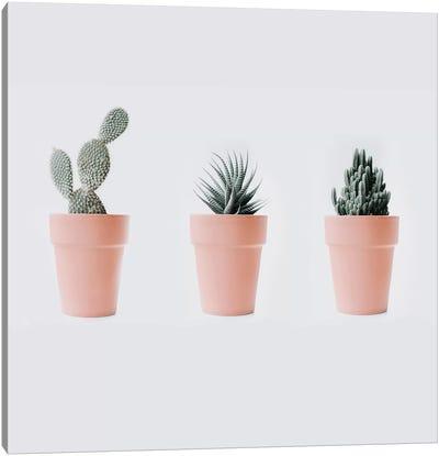 Cactus Love IV Canvas Art Print