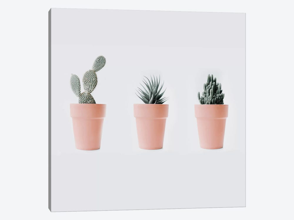 Cactus Love IV by Ingrid Beddoes 1-piece Canvas Art Print