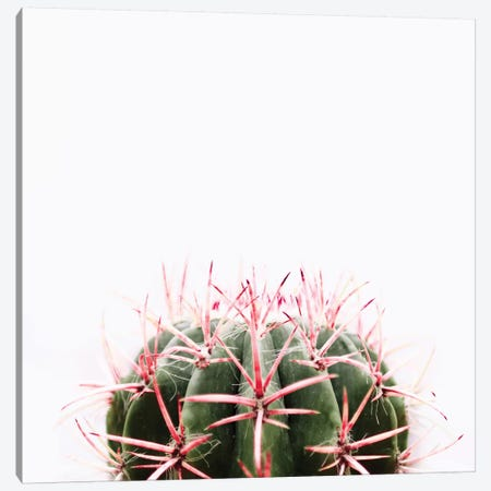 Cactus Red Canvas Print #INB27} by Ingrid Beddoes Canvas Artwork