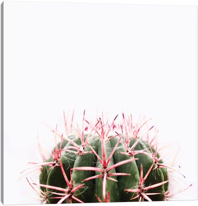 Cactus Red Canvas Art Print