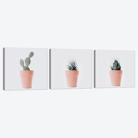 Cactus Love Triptych Canvas Print Set #INB3HSET001} by Ingrid Beddoes Art Print