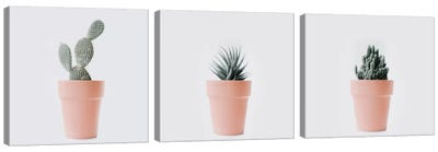 Cactus Love Triptych Canvas Art Print
