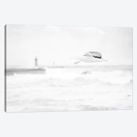 Flight Canvas Print #INB41} by Ingrid Beddoes Art Print