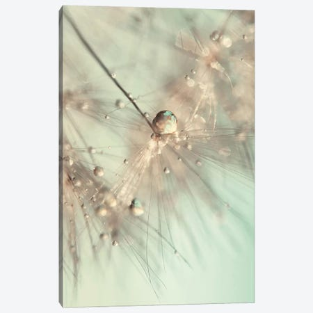 Morning Sparkle Canvas Print #INB54} by Ingrid Beddoes Canvas Print