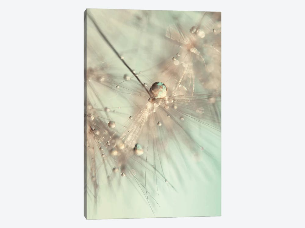 Morning Sparkle by Ingrid Beddoes 1-piece Canvas Artwork