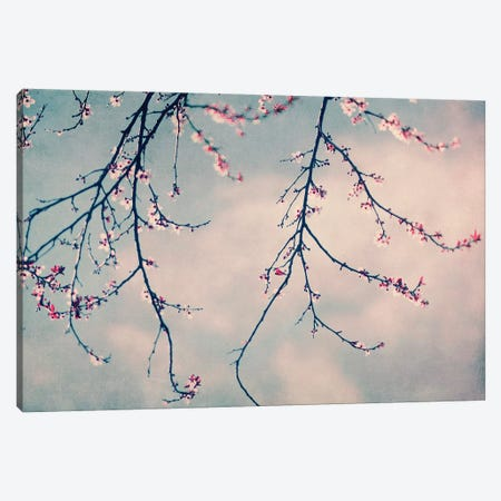 Pink Blossoms Canvas Print #INB61} by Ingrid Beddoes Canvas Print