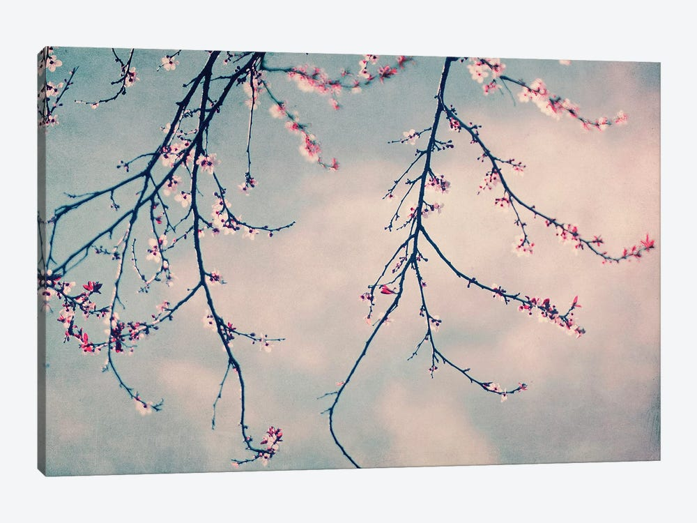 Pink Blossoms by Ingrid Beddoes 1-piece Canvas Wall Art