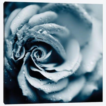 Powder Blue Rose Canvas Print #INB63} by Ingrid Beddoes Art Print