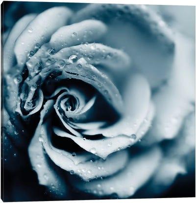 Powder Blue Rose Canvas Art Print