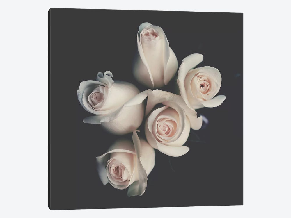 Roses by Ingrid Beddoes 1-piece Canvas Wall Art