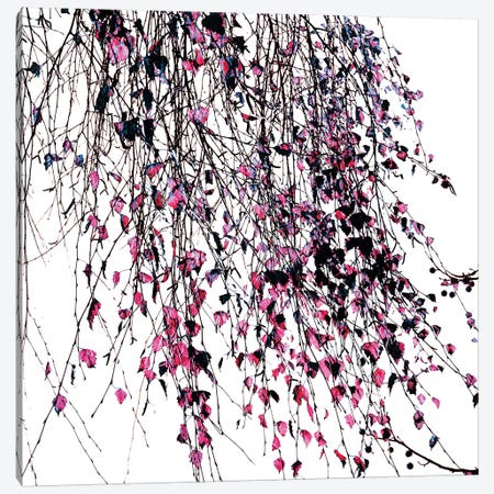 Willow Pink Canvas Print #INB94} by Ingrid Beddoes Canvas Art Print