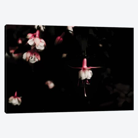 Fuschia Pink Canvas Print #INB99} by Ingrid Beddoes Canvas Art